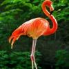 ФламингА